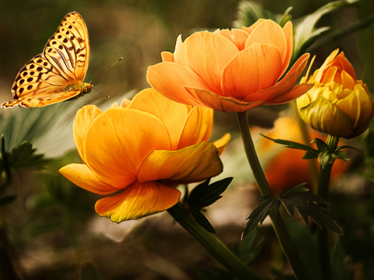 Butterfly-on-Flowers-Wallpaper