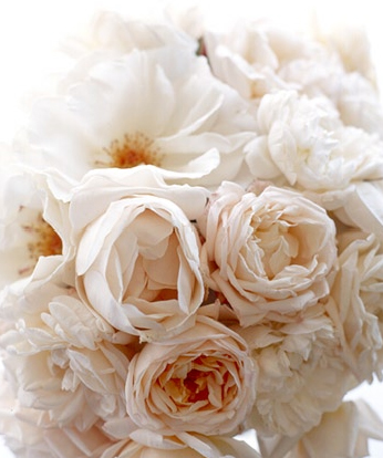pick_blush_peonies