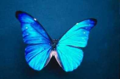 fluture - 1