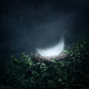 cuibul lunii
