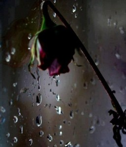 gustul ploii