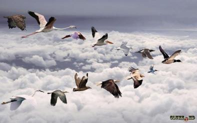 pasari deasupra norilor