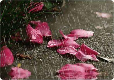 petale in ploaie
