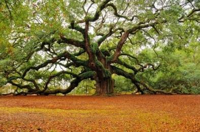 copacul-vietii-2_07991c58666aa3