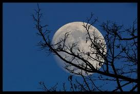 luna, ramuri 1