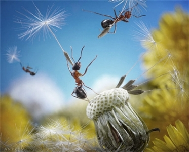 macrofotografii-cu-furnici-23