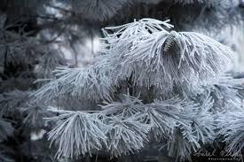 pin ninsoare
