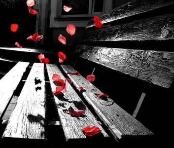 fhfd-petale rosii banca neagra