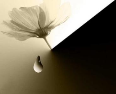 o-floare-pe-o-lacrima_6088318706fe72