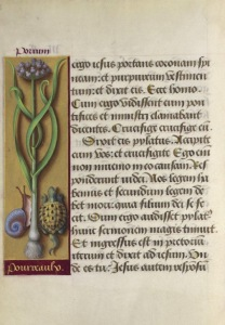 pagina_de_manuscris_decorata_cu_plante_si_animale