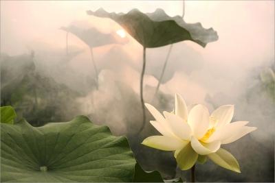 galerie-foto-poze-cu-flori-exotice-lotus