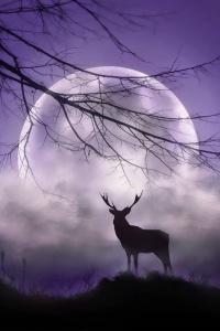 lune et cerf-Isabelle Ferchaud