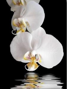tablou-orhid.-04~842968.