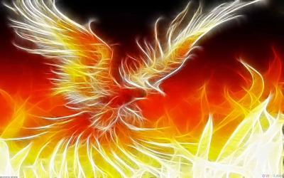 Creative-Widescreen-Phoenix-Image